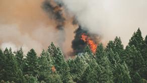 Catastrophic Australian bush-fires