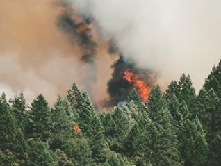 纳奈莫圣诞树农场起火,近千棵树被毁