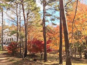 forest3_edited.jpg