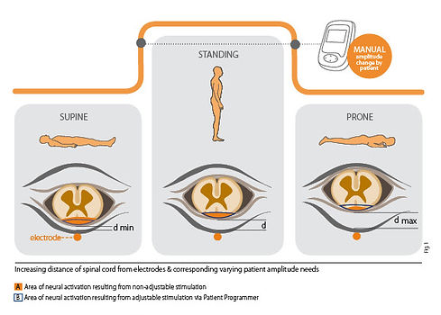 Anatomy_1.jpg