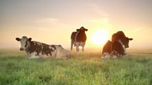 Flat and cozy Dutch farmland