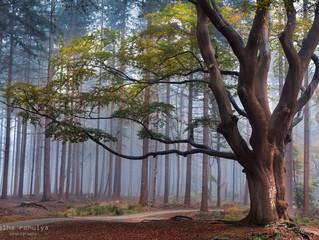 An autumn post