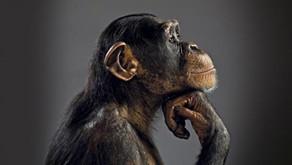 Los animales como instrumentos de la ideología