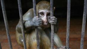 El remedio, la enfermedad y los monos