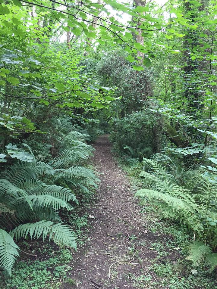 Millendreath Woods