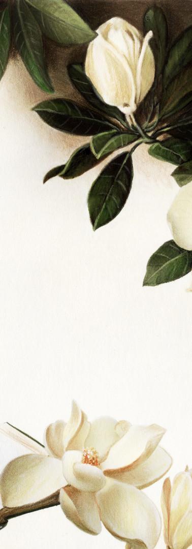 Poesia per magnolia