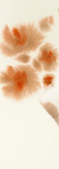 Fiore di Donna