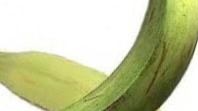 Verde / Plátano Barraganete