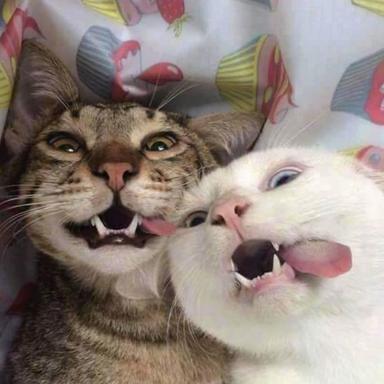 happy-cat-11.png
