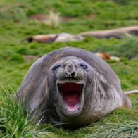 seal.webp
