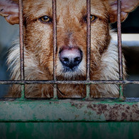 dog in cage 1.jpg