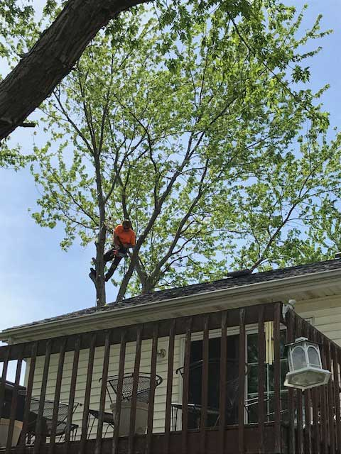 Embark-Tree-Removal-climbing-tight