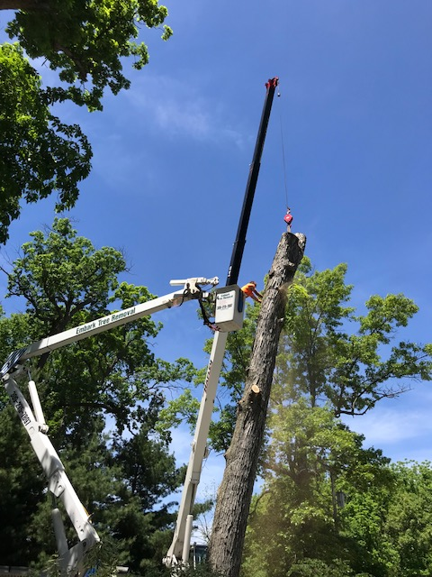 Embark-Tree-Removal-Craning-oak-tree