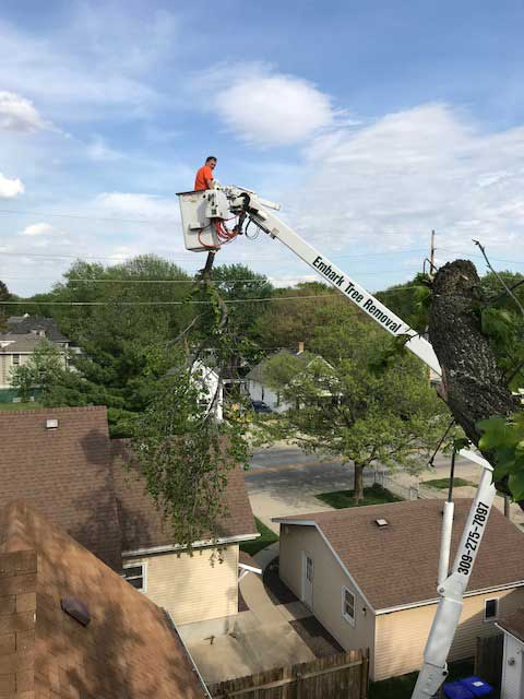Embark-Tree-Removal-craning-bloomington.
