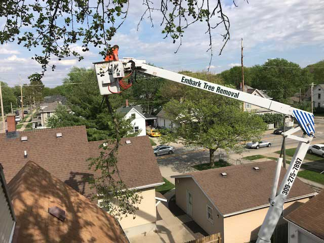 Embark-Tree-Removal-craning-bucket