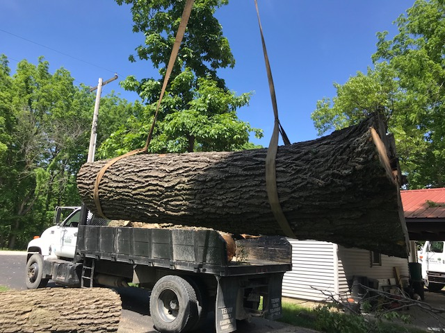 Embark-Tree-Removal-Log-to-Mill