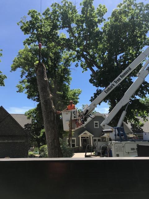 Embark-Tree-Removal-removing-large-oak