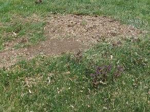 ETR-stump-after.jpg