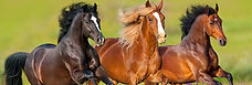 shop-horses-banner.jpg