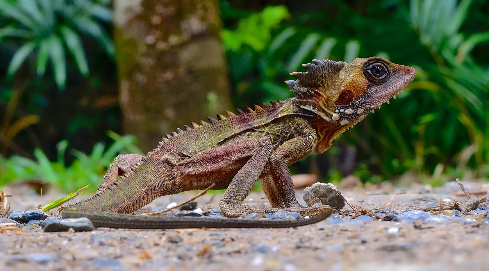 Boyds Forest Dragon