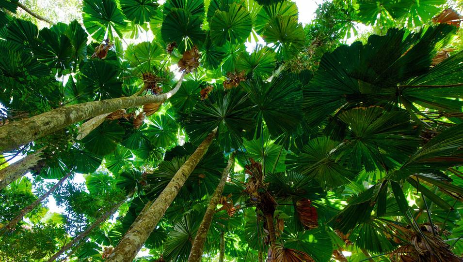 Fan Palm Gallery