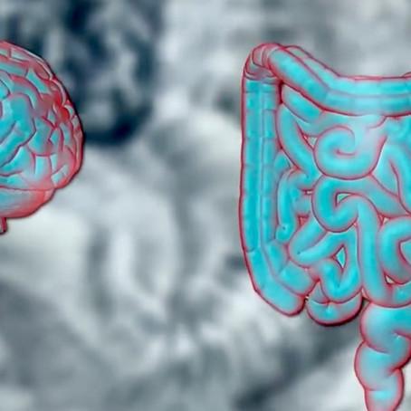 Le Ventre - Notre Deuxième Cerveau