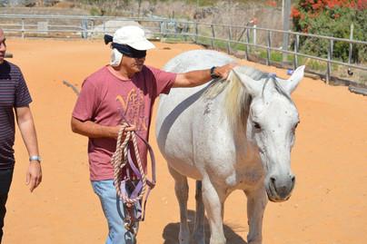 סדנאות סוסים