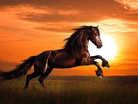 אז מדוע סוסים?
