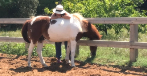 טיפול סוסים