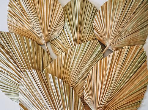 Dried fan leaf