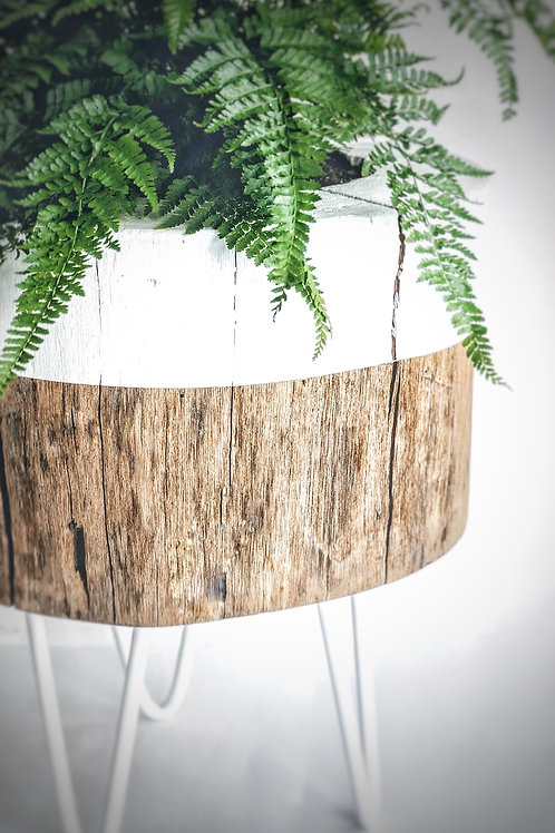 Tree trunk Plant stand
