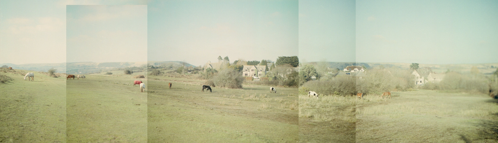 herd.rs.jpg