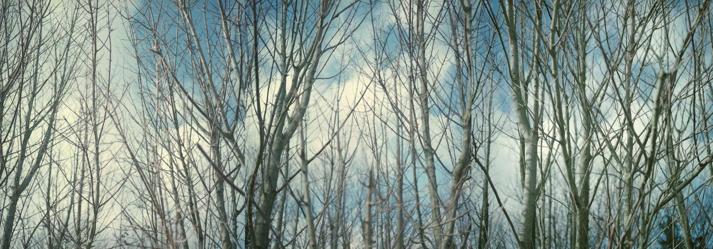 salistrees.rs.jpg