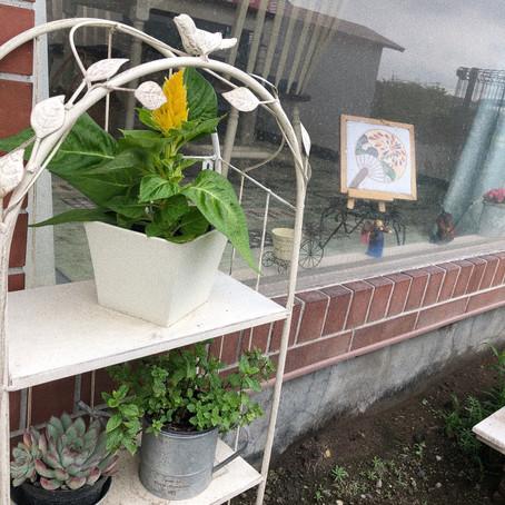 ケイトウのお花💐