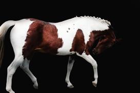 horses-456psa.jpg