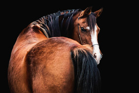 horses-366psaclosera.jpg