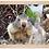 Thumbnail: Cadre en bois - Marmottes