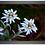 Thumbnail: Cadre en bois - Edelweiss