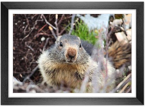 Cadre en bois - Marmottes