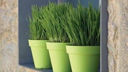 """Fulwari Plastic Flower Plant Container for Garden Outdoor Indoor Height 13.5"""" In"""
