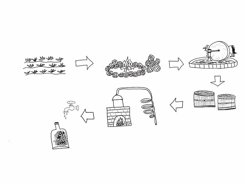 Mezcal process.jpg