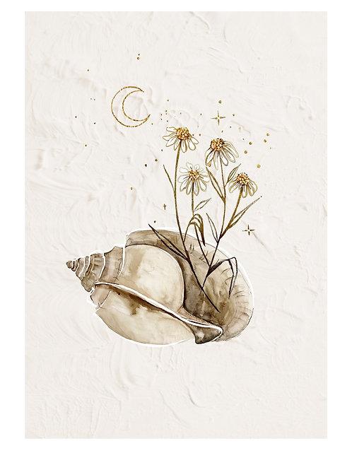Seashells & Stars - By Brigitte May
