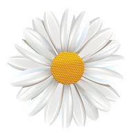 Daisy_Flower.png
