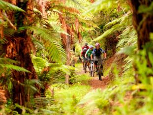 Mountain Biking - Waihaha Trail