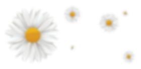 Daisy_FlowerS.png