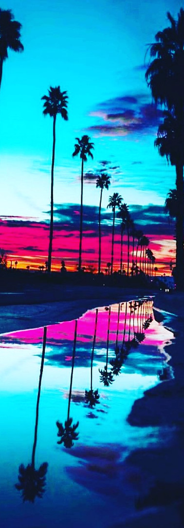 Colorful Palms