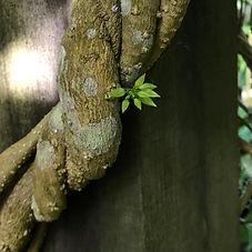 Plant_v01.jpg