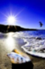 Brad_Liber_-_Bass_Point_Reserve-800x1205