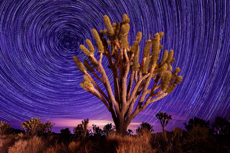 Magenta Star Trails.tif