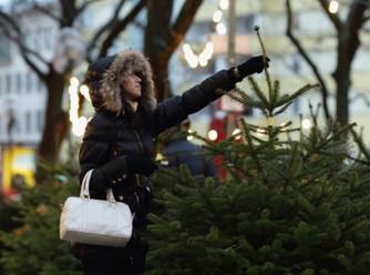 Елочные базары в Пушкине откроются 20 декабря